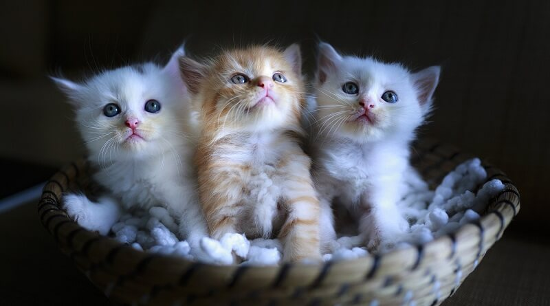Elever un chaton