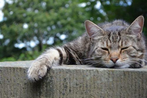 La phytothérapie pour les chats