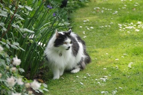 Éloigner les chats de son jardin