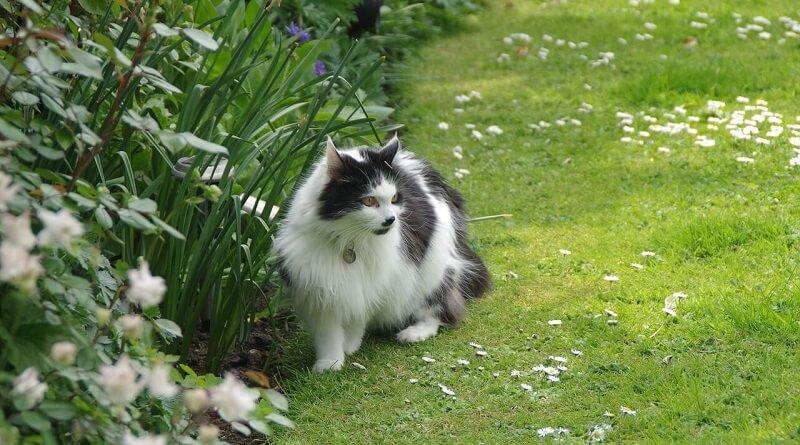 Loigner les chats de son jardin le monde des chats - Cloturer son jardin ...