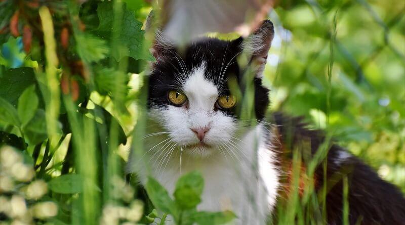 Le chat et son territoire