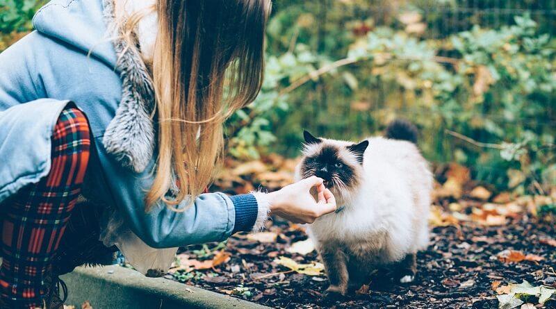 Donner des médicaments à son chat
