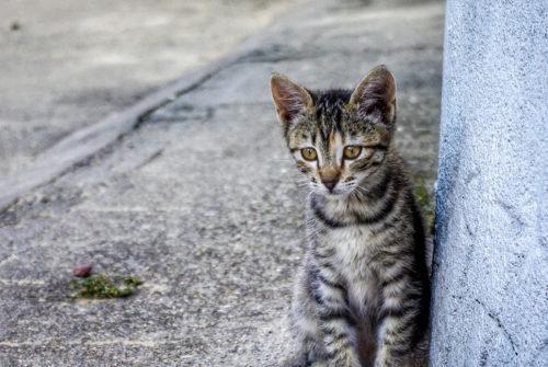 Chat perdu