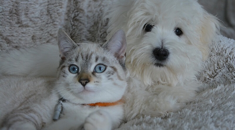 Le chat et les autres animaux