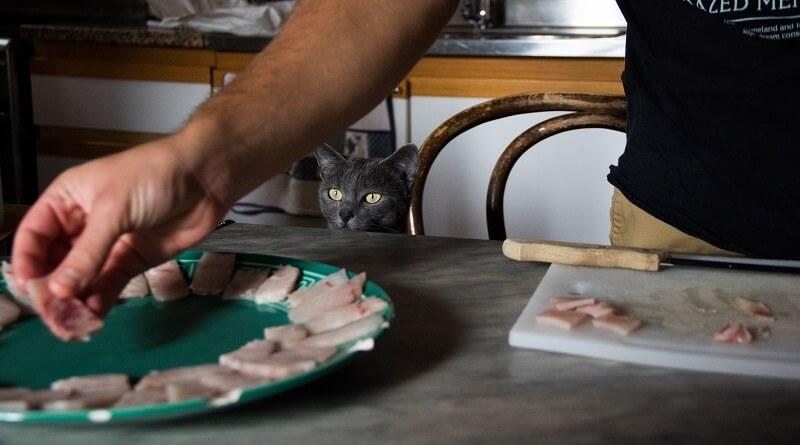 cuisiner pour son chat le monde des chats. Black Bedroom Furniture Sets. Home Design Ideas