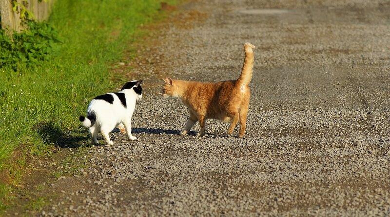 Présenter des chats