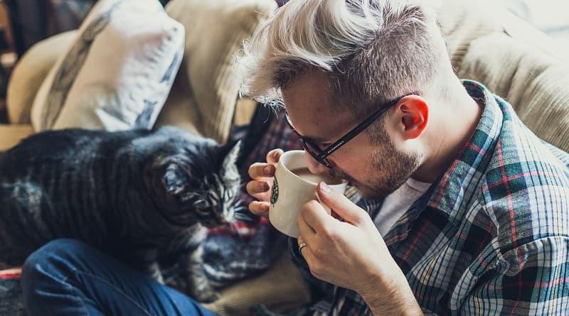 Comment un chat reconnaît son maître ?