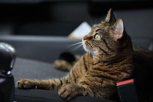 3 choses à faire pour voyager l'esprit tranquille avec son chat