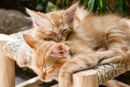 Le sommeil chez les chats